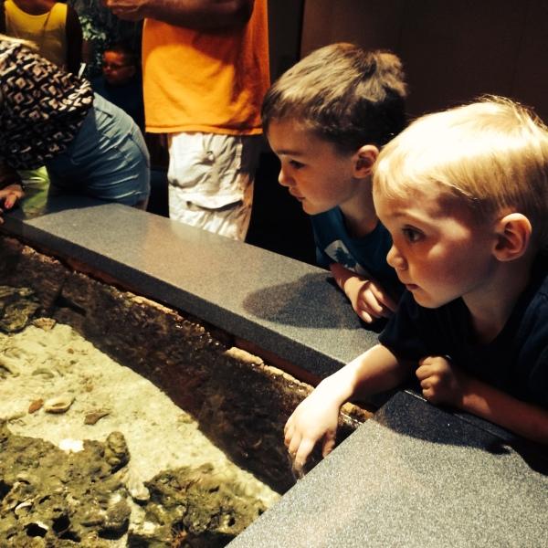 Aquarium A